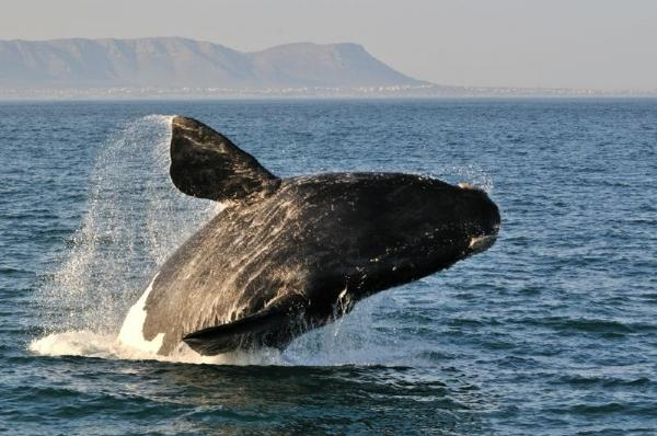 Private Cape Whale Watching and Wine Tour