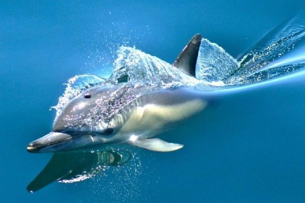 Whale & Dolphin Eco-Safari