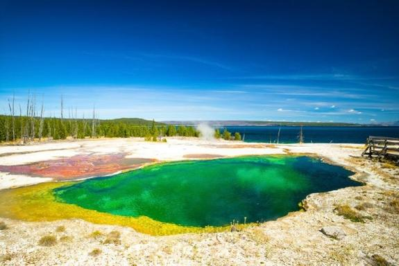 Yellowstone Deluxe Lower and Upper Loops Tour from Jackson Hole