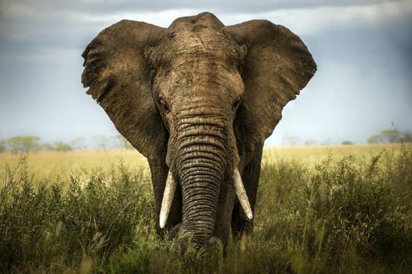 Cape Town Wildlife Safari Tour