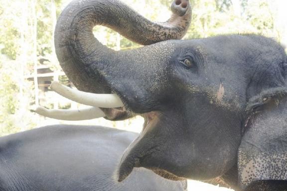Elephant Sanctuary & Orang Asli Settlement Day Trip