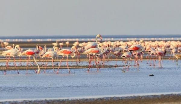 4-Day Tanzania Safari: Lake Manyara, Eyasi, & Natron