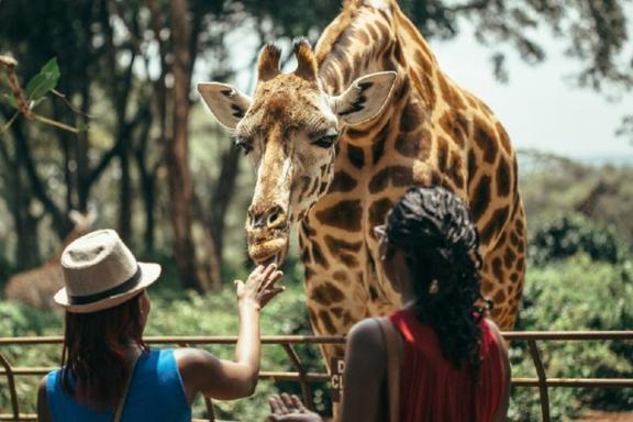 Nairobi Wildlife Park, Elephant Sanctuary, & Giraffe Center Tour