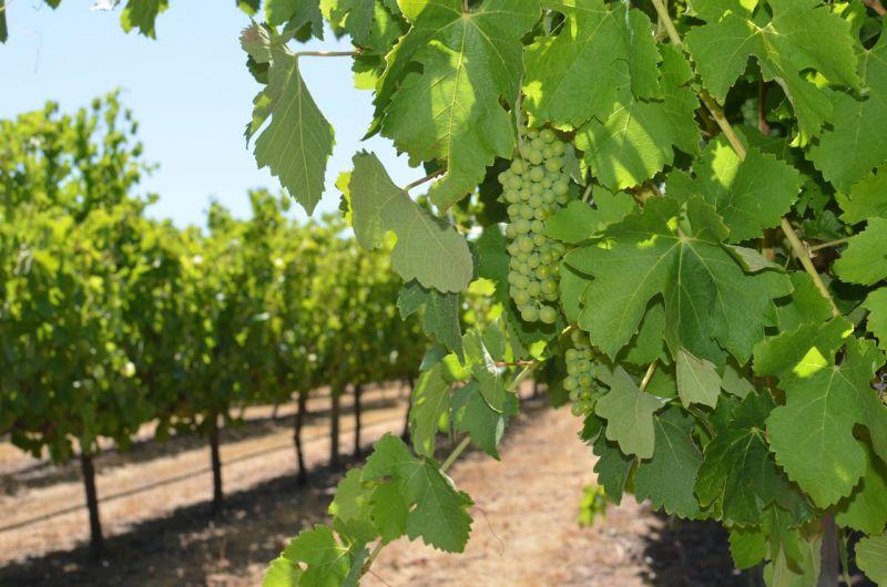 Margaret River Wine & Sights Tour