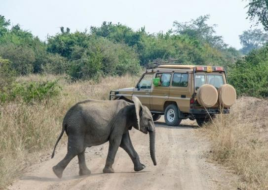 4-Day Queen Elizabeth National Park Tour