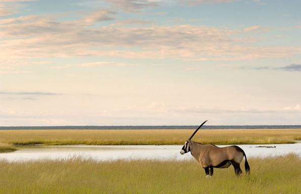 7-Day Botswana Mobile Safari: Central Kalahari & Naxi Pans