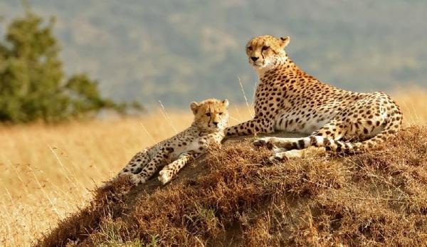 6-Day Best of Kenya Safari