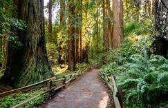 tours to muir woods:Muir Woods & Sausalito Tour