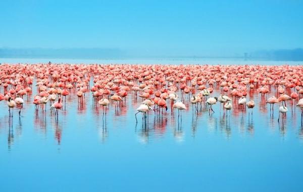 14-Day Kenya Safari: Tsavo, Amboseli, Samburu, Nakuru, & Masai Mara