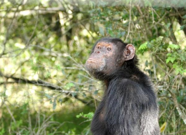 9-Day Kenya Safari: Samburu, Sweetwaters, Nakuru and Masai Mara Safari