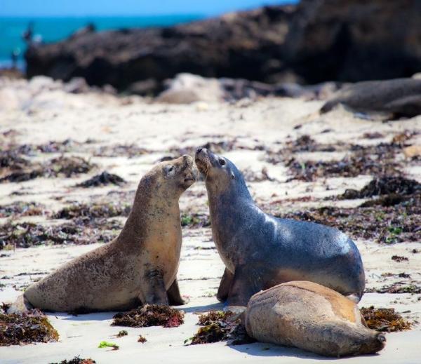 Dolphin, Penguin & Sea Lion Adventure Cruise