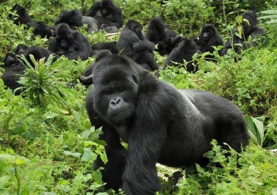 9-Day Uganda Gorilla Trekking & Chimp Tracking in Kibale