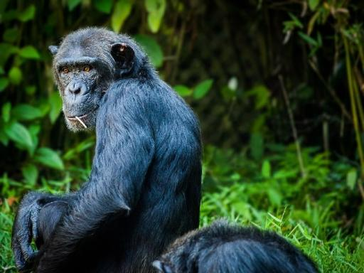 3-Day Chimp Trekking Tour in Kibale Forest