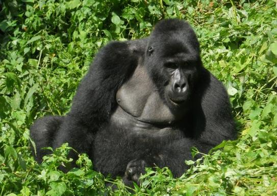 10-Day Uganda Gorilla Trekking and Wildlife Safari