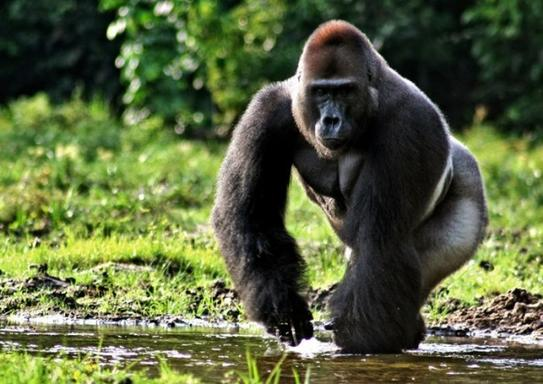 12-Day Uganda Safari: Kibale Forest, Queen Elizabeth NP, Bwindi NP, & Lake Mburo