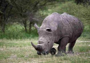 15-Day Platinum Primate Safari: Kibale, Queen Elizabeth, Bwindi, Lake Mburo, & Crater Lakes