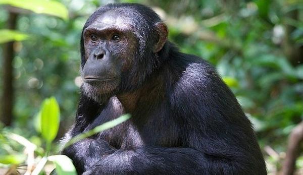 5-Day Uganda Gorilla Tracking & Kibale Chimps Trek Safari