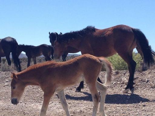 Wild Horses of Nevada Day Trip