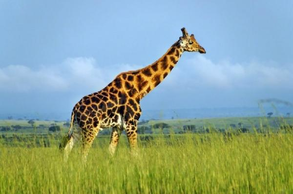 5-Day Murchison Falls Safari