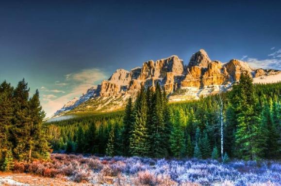 Banff Winter Sightseeing & Wildlife Tour
