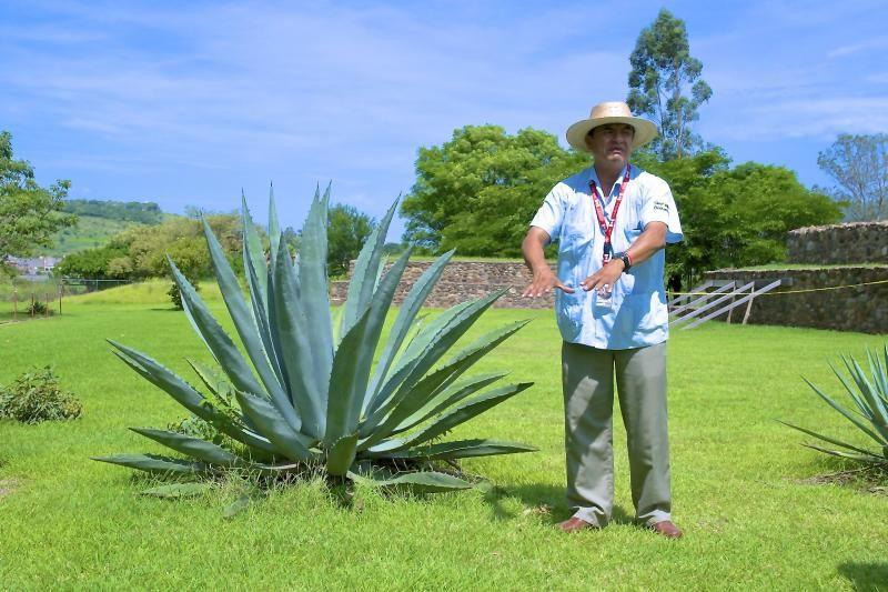 Tequila, Tortillas, Volcanoes and Archaeology Day Trip