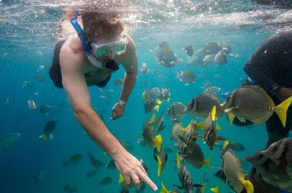 Pelican Rock Classic Snorkeling Tour