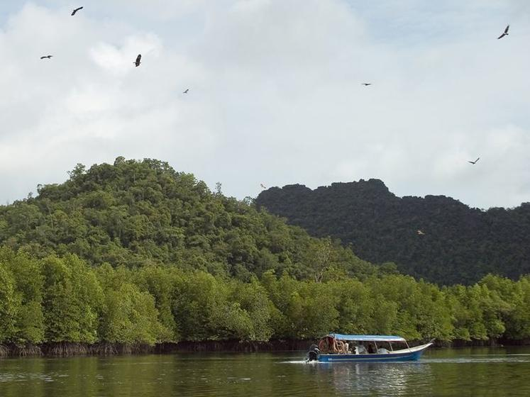 Langkawi Mangrove Forest and Eagle Watching Cruise with Lunch