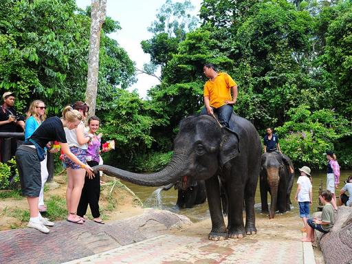 Elephant Sanctuary Tour with Lunch