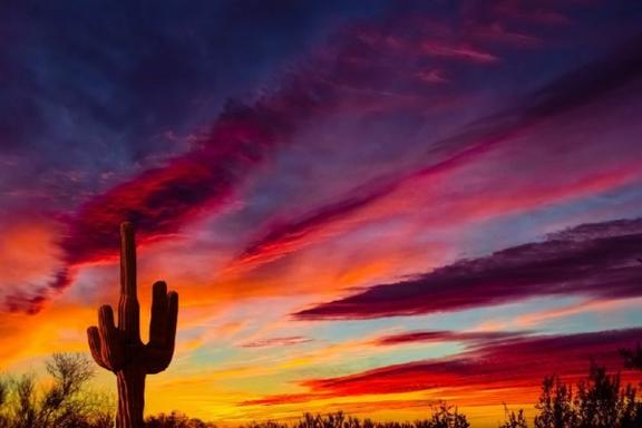 4-Day Arizona Sunshine Tour: Phoenix - Tuscon - Mission San Xavier del Bac - Saguaro National Park