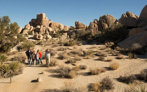 Joshua Tree National Park Tour