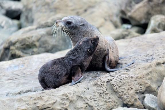 Wildlife Sanctuary and Marine Reserve Cruise