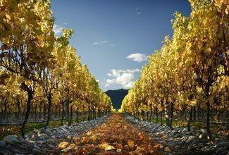 Marlborough Icons Tour: Wine Region + Marlborough Sounds