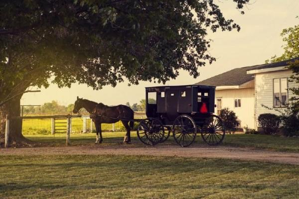 1-Day Christmas Day Tour: Amish Farm, Hershey's Chocolate World, Christmas Village