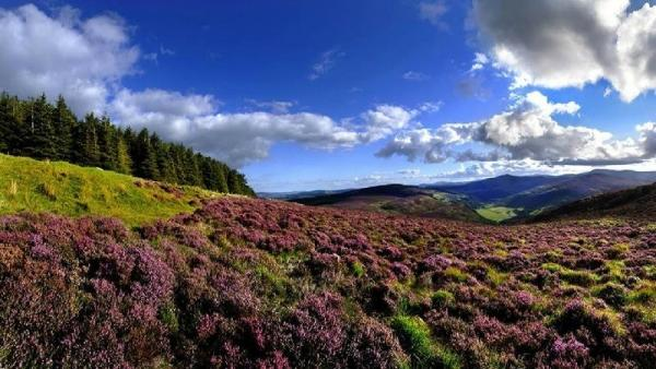 Kilkenny, Wicklow Mountains and Glendalough Day Tour from Dublin