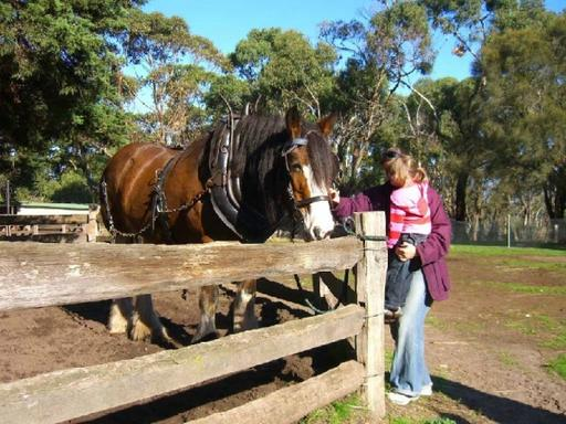 Grand Phillip Island and Eco-Adventure Day Trip From Melbourne