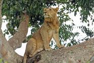 4-Day Queen Elizabeth & Lake Mburo National Park Wildlife Safari