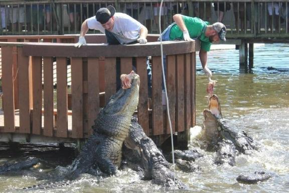 Gatorland Tour - Transportation Only