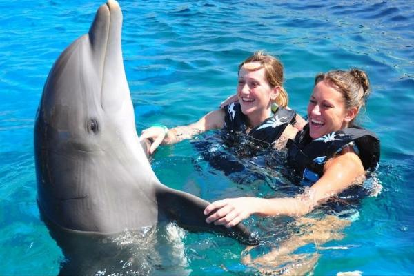1-Day Swim with the Dolphins in St. Augustines