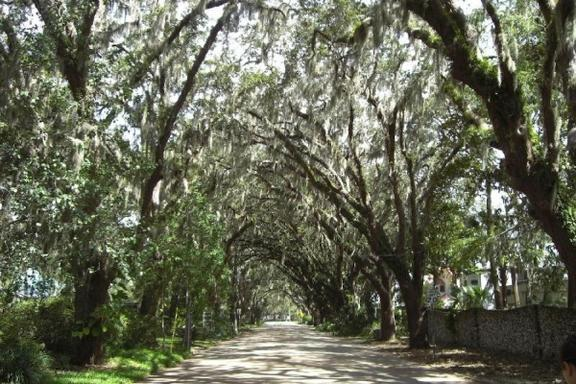 St Augustine's Day Tour