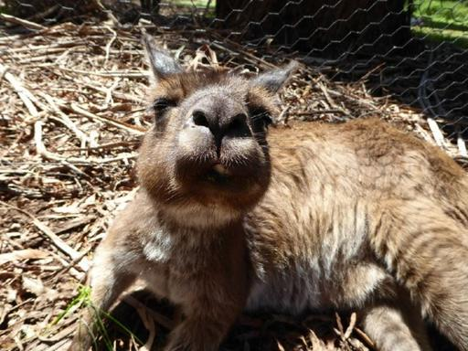Healesville Sanctuary, Dandenong Ranges & Puffing Billy Day Trip