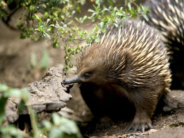Healesville Sanctuary, Dandenong Ranges, Puffing Billy & Penguin Parade Tour