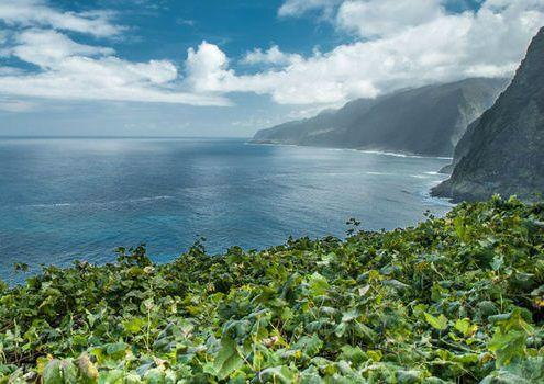 Full Day Madeira Wine Tour From Funchal