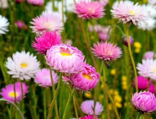Perth Wildflower Day Tour