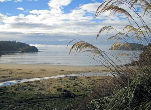 Stewart Island Village and Bays Tour
