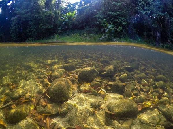 Daintree Rainforest River Drift Snorkeling