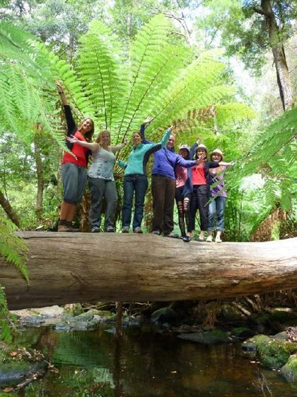 Mt. Field National Park & Wildlife Hiking Tour
