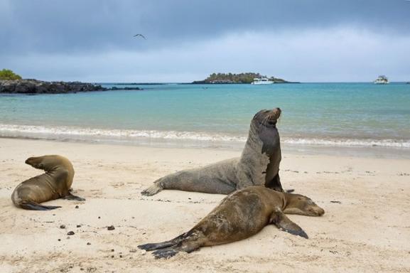 Santa Fe Island & Hidden Beach Snorkeling Tour