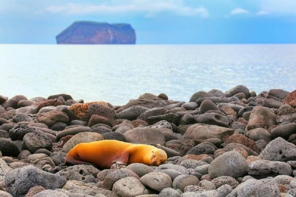 North Seymour Island Day Tour W/ Bachas Beach