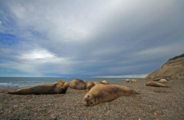 Peninsula Valdes Wildlife Sightseeing Tour From Puerto Madryn