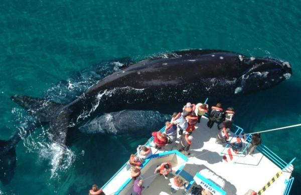 2-Hour Puerto Madryn Whale Watching Adventure
